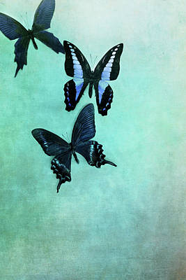 Photograph - Three Butterflies by Stephanie Frey