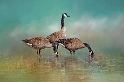 Photograph - Three Canada Geese by HH Photography of Florida