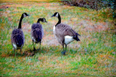 Canadian Geese Painting - Three Canadian Geese by Lanjee Chee