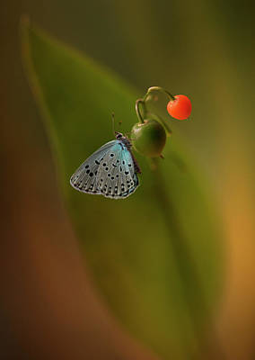 Photograph - Three Colours by Jaroslaw Blaminsky