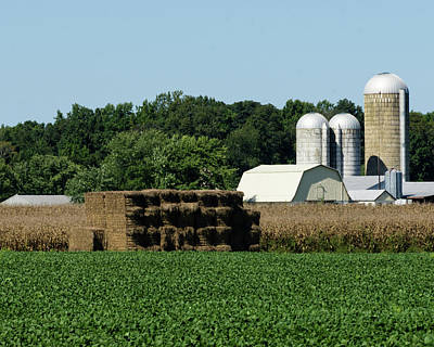 Photograph - Three Crops by Steve Atkinson