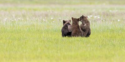 Photograph - Three Cubs Watching by Mark Harrington