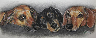 Pastel Drawing Pastel - Three Cute Dogs by Angela Hannah