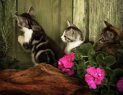 Photograph - Three Cute Kittens Waiting At The Door by Ethiriel Photography