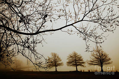 Art Print featuring the photograph Three Cypress In The Mist by Iris Greenwell