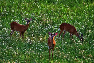Photograph - Three Deer by Kathryn Meyer