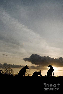 Whippet Digital Art - Three Dogs At Sunset by Clayton Bastiani