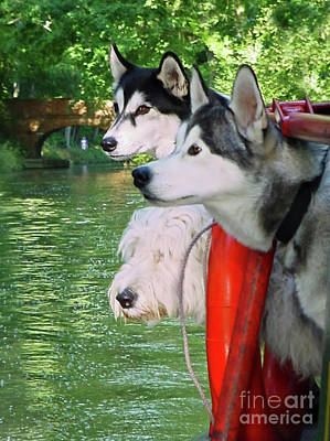Three Dogs On A Boat Art Print by Terri Waters