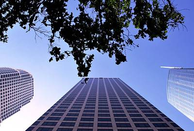 Photograph - Three Downtown La Skyscrapers Tree View  by Matt Harang