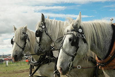 Draft Horses Photograph - Three Draft Horses by Jeff Swan