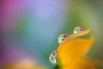 Canon Eos 5d Mark Iii Photograph - Three Droplets by Yuri Figuenick
