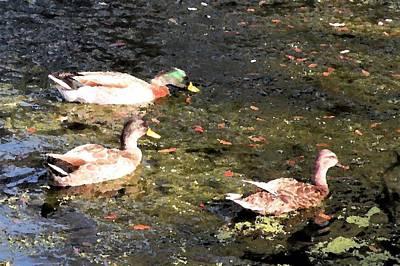 Photograph - Three Ducks by Kim Bemis