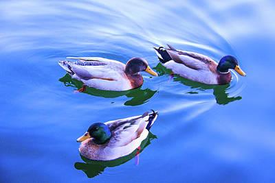 Photograph - Three Ducks by Susan Crossman Buscho