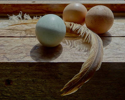 Painting - Three Eggs And A Feather  by Carol Berning
