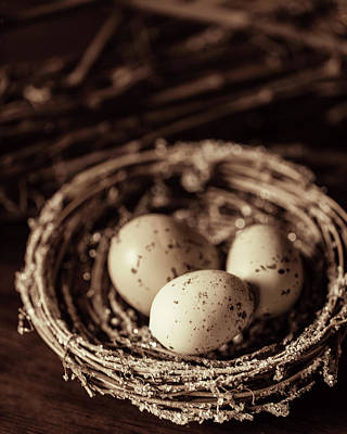 Photograph - Three Eggs In A Nest by Rebecca Cozart