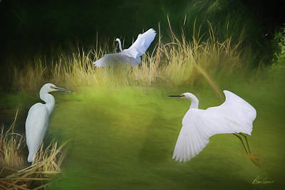 Photograph - Three Egrets by Diana Haronis