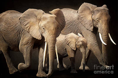 Digital Art - Three Elephants by Angela Doelling AD DESIGN Photo and PhotoArt