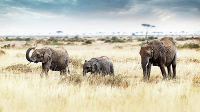 Photograph - Three Elephants Walking In Kenya Africa by Susan Schmitz