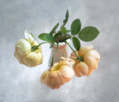 Print featuring the photograph Three English Roses by Louise Kumpf