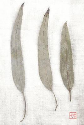 Three Eucalyptus Leaves Print by Carol Leigh