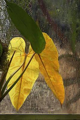 Art Print featuring the photograph Three Exotic Leaves by Viktor Savchenko