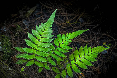 Wooden Building Photograph - Three Fern Night by Marvin Spates