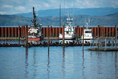Photograph - Three Fishing Boats by Tom Cochran