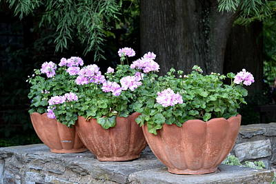 Art Print featuring the photograph Three Flower Pots by Deborah  Crew-Johnson