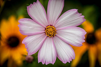 Photograph - Three Flowers by Viviana  Nadowski