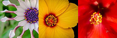 Photograph - Three Flowers Triptych by TK Goforth
