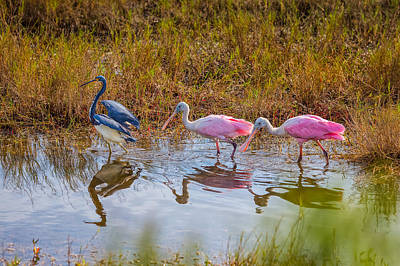Photograph - Three For Lunch by John M Bailey