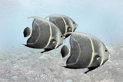 Angel Fish Photograph - Three French Angels by Russ Harris