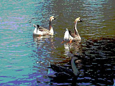 Three Geese Swimming Art Print by Diann Baggett