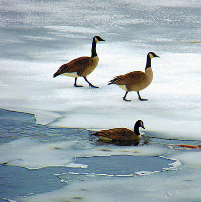 Photograph - Three Geese by Wild Thing