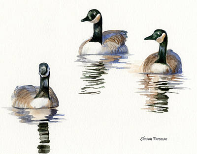 Ducks Painting - Three Geese With Black Necks by Sharon Freeman
