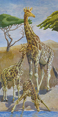 Drawing - Three Giraffes by Dominic White
