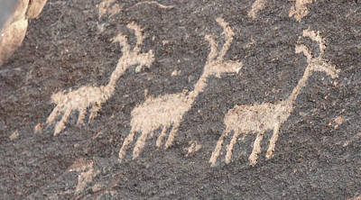 Travel Rights Managed Images - Three Goats Royalty-Free Image by David Arment