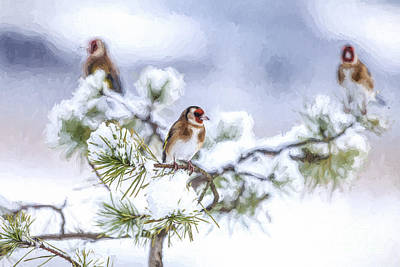 Digital Art - Three Goldfinches In Snowy Pine by Liz Leyden