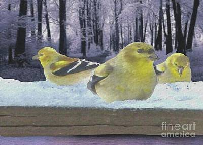 Photograph - Three Goldfinches In Winter by Janette Boyd
