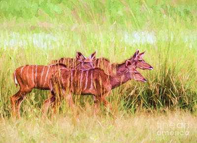 Digital Art - Three Greater Kudus by Liz Leyden