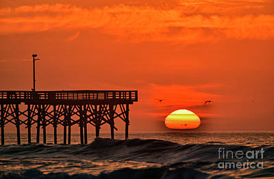 Photograph - Three Gulls by DJA Images