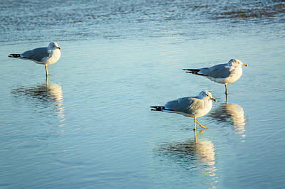 Photograph - Three Gulls Reflect by Joni Eskridge