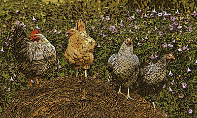 Three Hens And A Rooster Art Print by Shirley Sykes Bracken