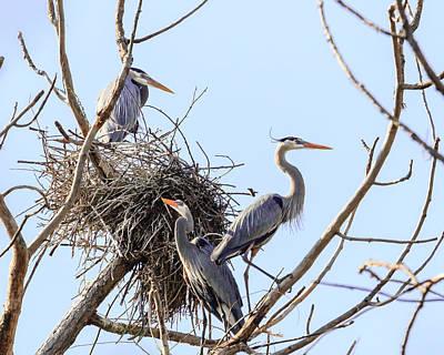 Photograph - Three Herons by Joni Eskridge