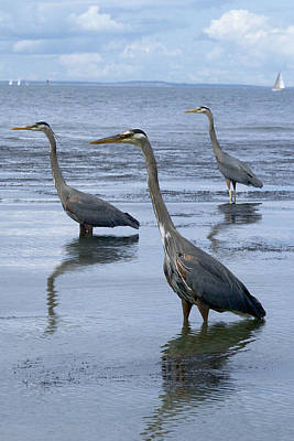 Photograph - Three Herons by Marcus Donner