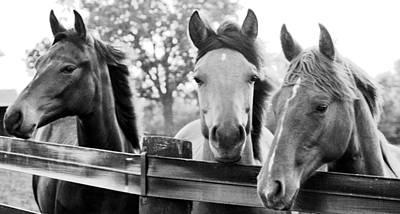 Three Horses Art Print by Brian Foxx