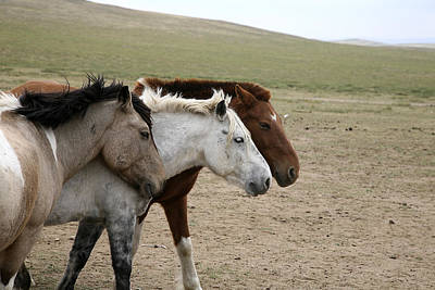Photograph - Three Horses by Marcus Best