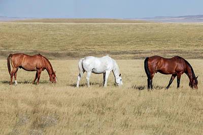 Teton Wall Art - Photograph - Three Horses by Todd Klassy