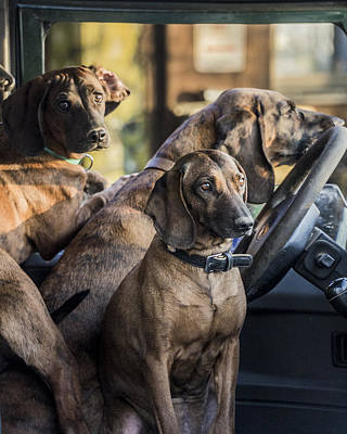 Photograph - Three Hunting Pointers Dogs by Evgeny Lutsko