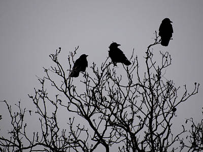 Photograph - Three In A Tree by Julia Wilcox